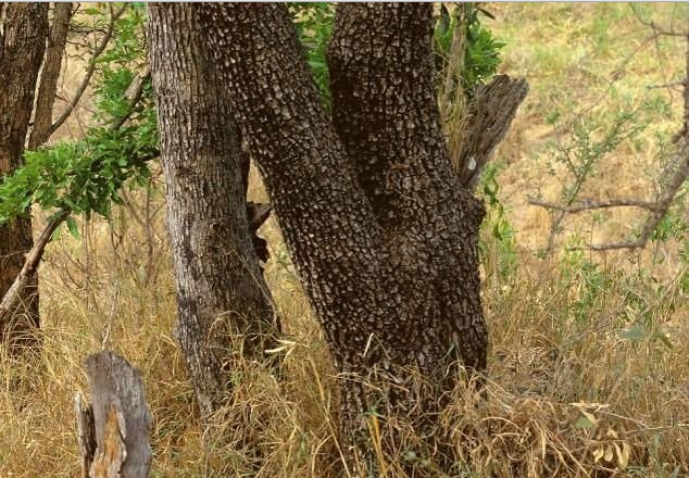 Find the hidden animal? Were you able to locate it...