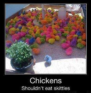 Chicken shouldn't eat skittles, otherwise